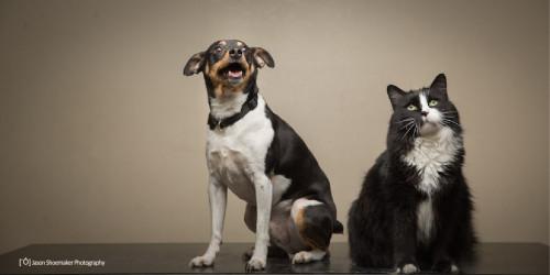 oscar rat terrier dog kirby tuxedo cat kansas city pet sitting cat sitting dog sitting dog walking